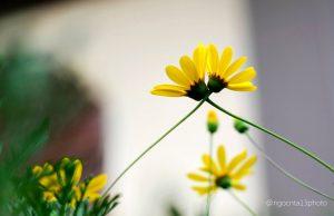 hạnh phúc là gì - hoachio.com
