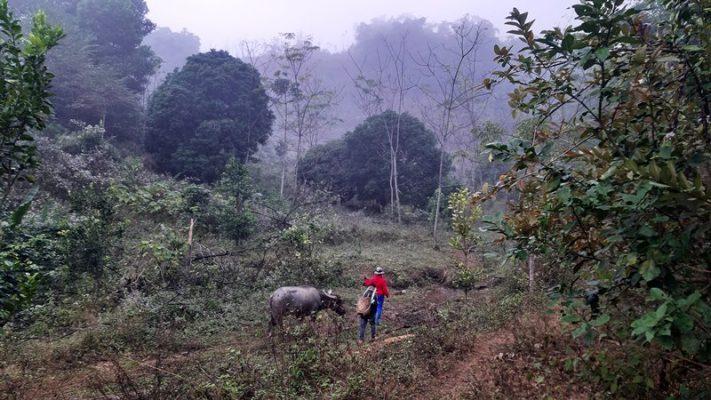 Đi bộ qua rừng Luồng